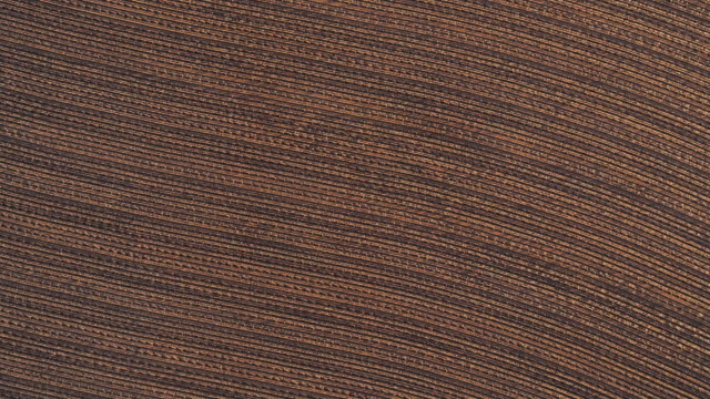 Cotton fields ready for harvesting at sunset in autumn, Texas, USA. Looking-down video showing a regular pattern, agricultural-themed video background. Aerial drone footage with the spinning camera motion.