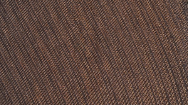 Cotton fields ready for harvesting at sunset in autumn, Texas, USA. Looking-down video showing a regular pattern, agricultural-themed video background. Aerial drone footage with the panning camera motion.
