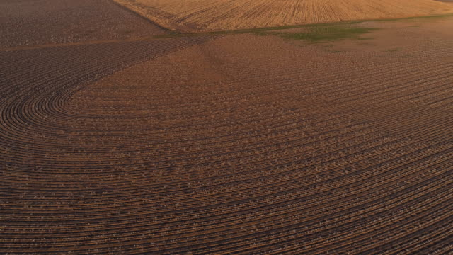 Cotton fields ready for harvesting at sunset in autumn, Texas, USA. Looking-down video showing a regular pattern, agricultural-themed video background. Aerial drone footage with the ascending and tilting-down camera motion.
