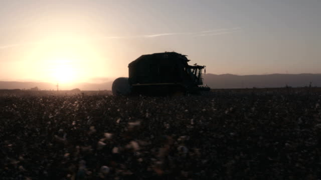 vídeos de stock e filmes b-roll de cotton harvester during cotton harvest in a field at sunset - algodão