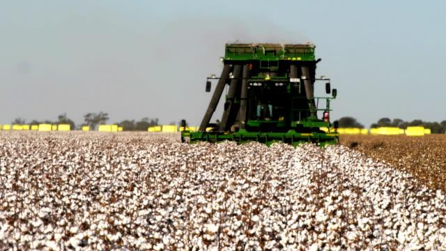 bomull skördare - cotton growing bildbanksvideor och videomaterial från bakom kulisserna