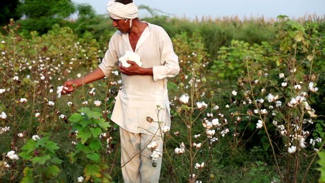 Cotton harvesting video
