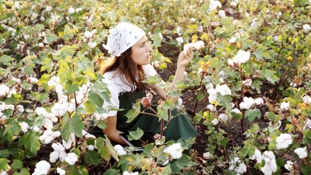 bomulls plockning säsong. blommande bomull fältet, ung kvinna utvärderar gröda före skörd, under en gyllene solnedgång ljus. - cotton growing bildbanksvideor och videomaterial från bakom kulisserna