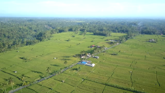 AERIAL: Country highway running through scenic rice paddy fields in sunny Bali video