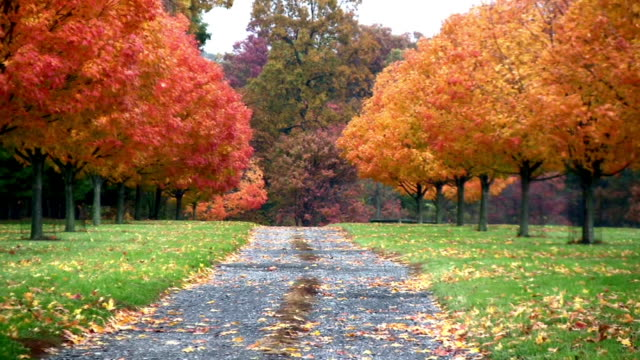 Country Road. Autumn. Zoom out over a country dirt road.  Autumn trees on the sides of frame. leaf vein stock videos & royalty-free footage