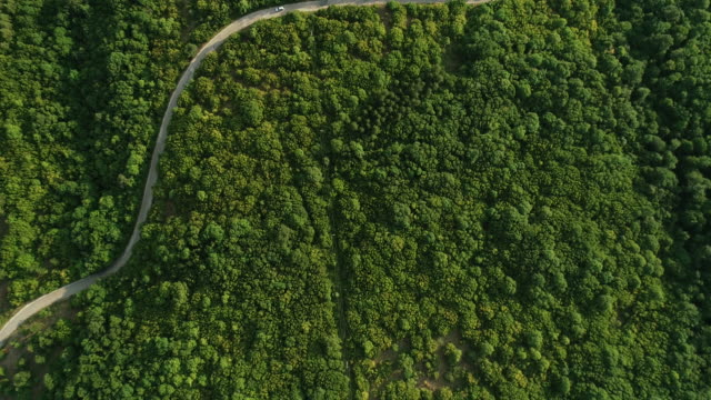 Country road curve Aerial view on the country road curve through the forest curve stock videos & royalty-free footage