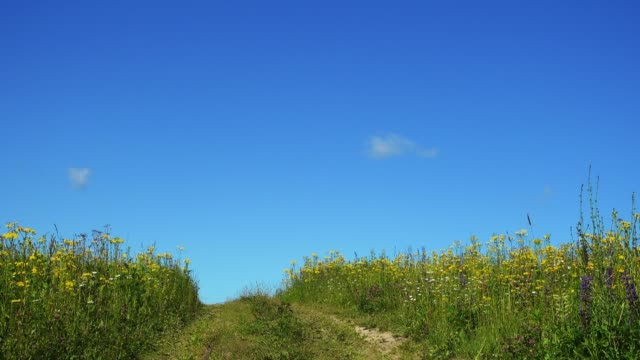 Country road in beautiful summer field with wild flowers video