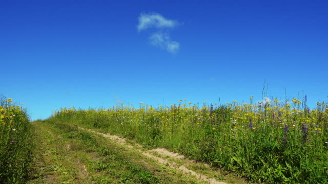 Country road in summer field at beautiful day. video