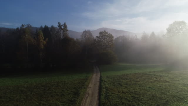 Country Road Leading in Autumn Forest video