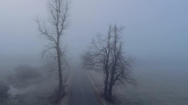 aerial: country road leading through dark creepy fields in foggy winter - albero spoglio video stock e b–roll