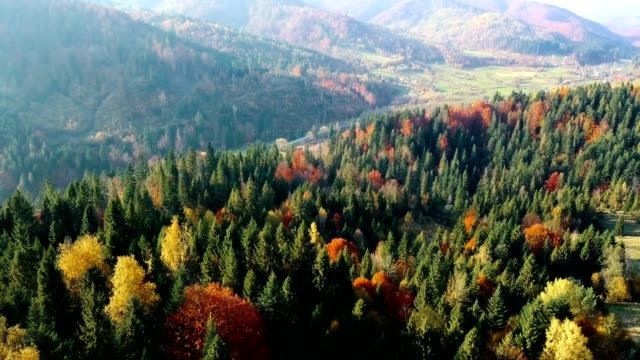 Countryside between the forests. Flying over beautiful mixed forest in sunny autumn in Carpathian mountains. Aerial view. video