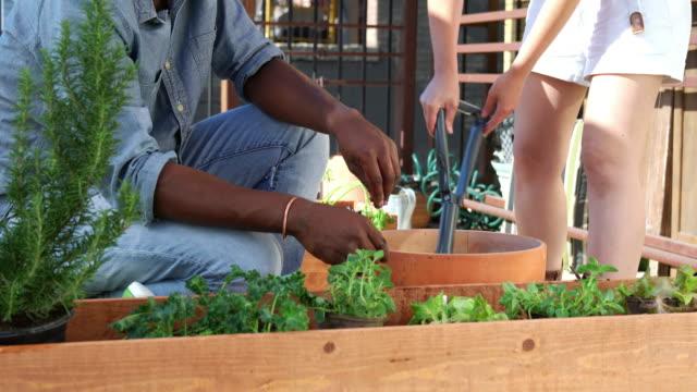 Paar, die oberste Schicht des Bodens zu ihren Pflanzen Topf hinzufügen – Video