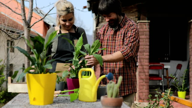 couple at home potting plants - gardening video stock e b–roll