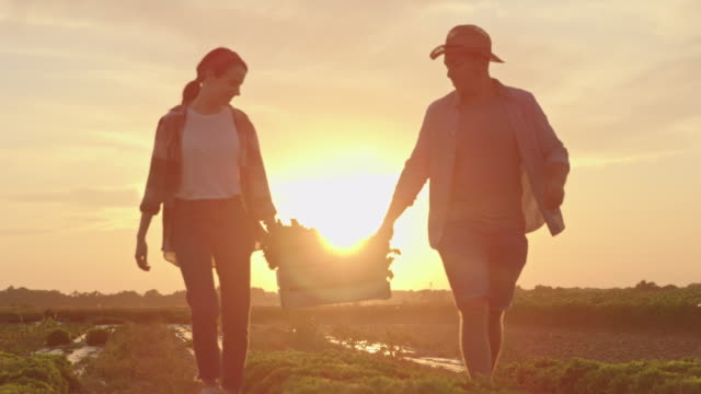 SLO MO Couple carries a crate across the field at sunset