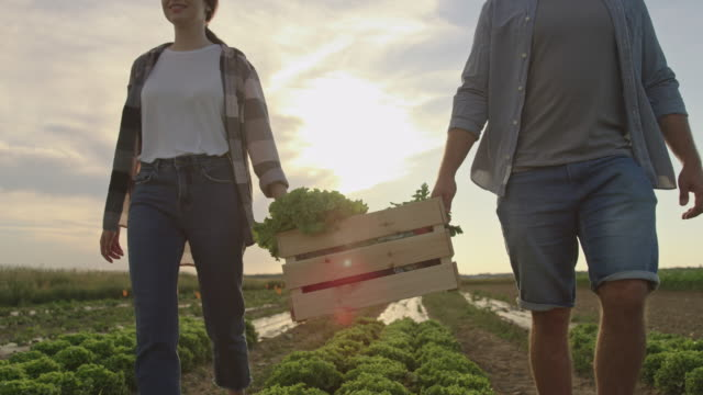 SLO MO Couple carries a crate full of freshly picked vegetables across the field at sunset