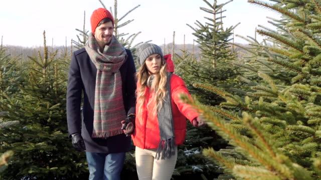 couple choosing a christmas tree - jodła filmów i materiałów b-roll
