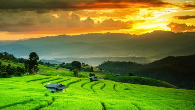 パボンピアンタイの田んぼのカップルコテージ - インドネシア点の映像素材/bロール
