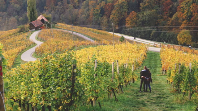 DS Couple embracing among vineyards