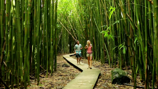 Couple hiking in bamboo forest video