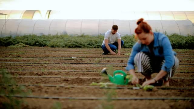 couple in the field planting vegetables - gospodarstwo ekologiczne filmów i materiałów b-roll