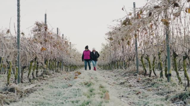 Ett par seniora kvinnor som arbetar på en liten vingård video