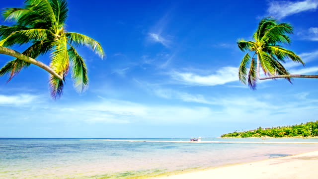 пара пальмовое дерево на пляж - дистанционный стоковые видео и кадры b-roll