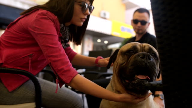 Couple petting their dog in cafe video
