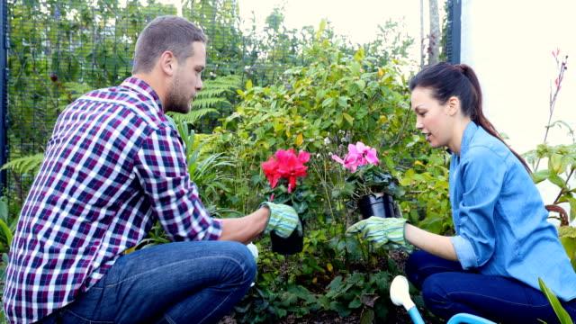 Par plantar flores en el jardín 4k - vídeo