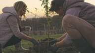 istock MS Couple planting fruit tree on rural hillside 1233218242