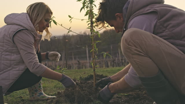 MS Couple planting fruit tree on rural hillside