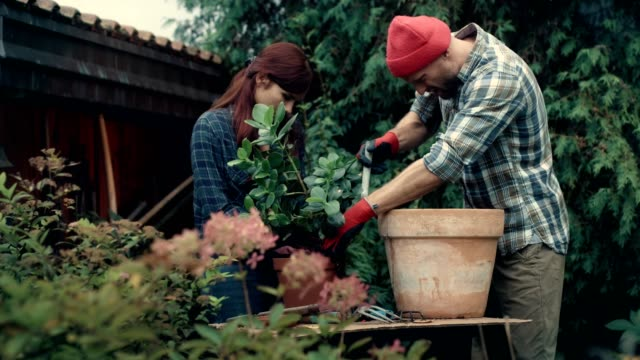 Couple replanting flowers in the garden DIY activity. Replanting flowers horticulture stock videos & royalty-free footage