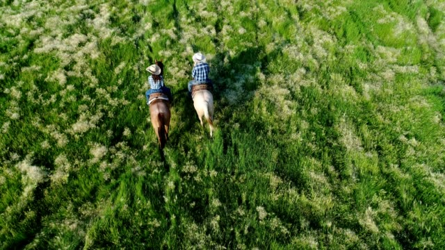 Couple Riding Horses Couple riding horses in green pasture, overhead view shot with drone. horseback riding stock videos & royalty-free footage