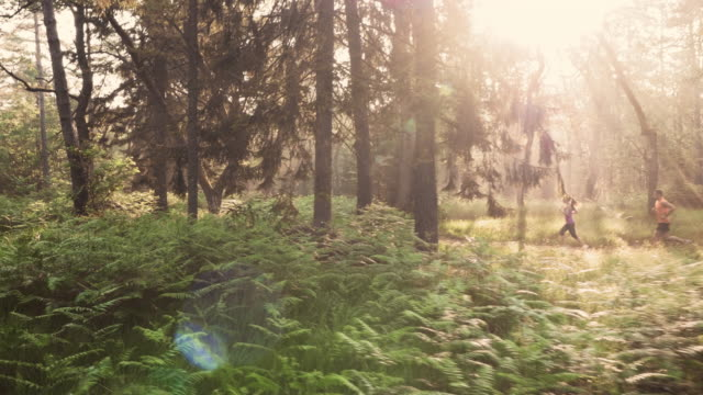 AERIAL Couple running through forest in early morning sun video