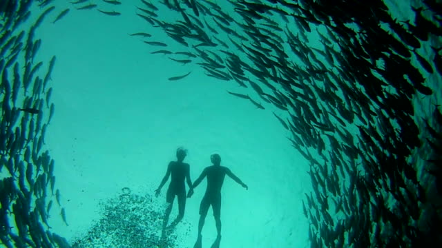 Couple swimming among shoal of jack fish Couple swimming among shoal of jack fish in Tulemben in Bali, Indonesia scuba diving stock videos & royalty-free footage