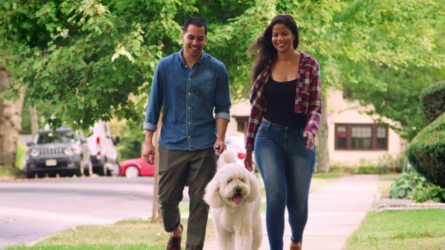 paare, die hund entlang der suburban street - hundesitter stock-videos und b-roll-filmmaterial