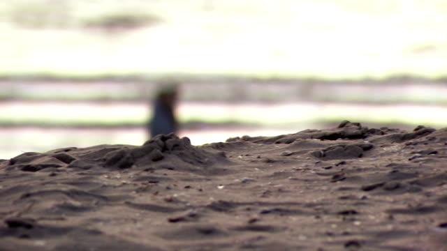 vidéos et rushes de couple marchant sur la plage - bivalve