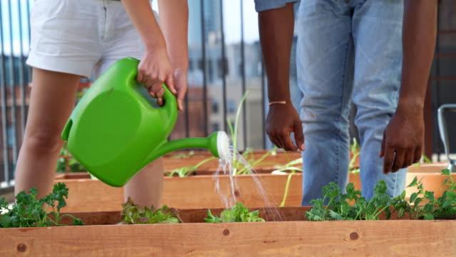 bewässerung von pflanzen in ihrem stadtgarten paar - dachgarten videos stock-videos und b-roll-filmmaterial