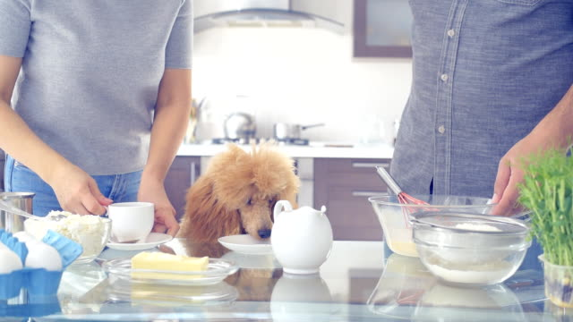 Couple with dog is making breakfast . video