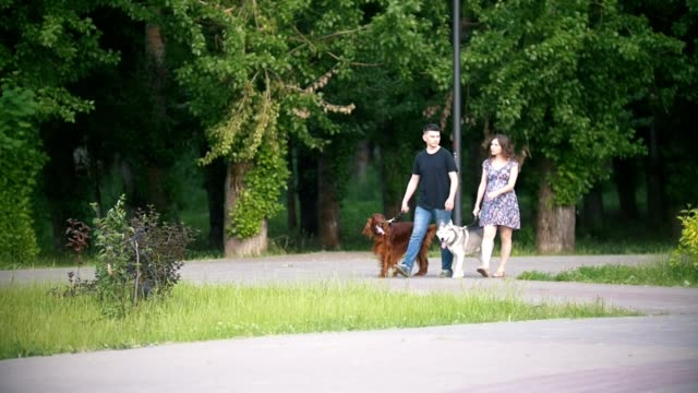 Couple with pets walking in park - man and woman walks with irish setter and husky Couple with pets walking in park - man and woman walks with irish setter and husky, telephoto shot irish setter stock videos & royalty-free footage