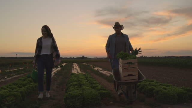 SLO MO Couple working in the field at dusk
