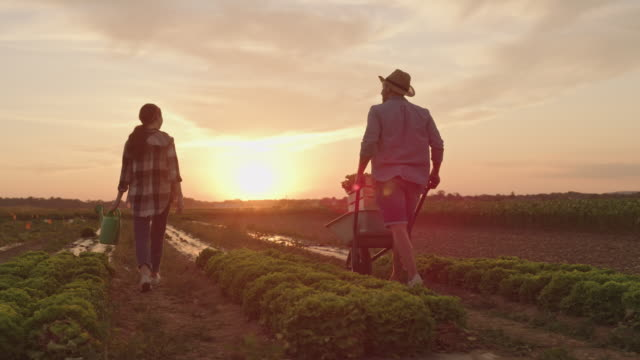 SLO MO Couple working in the field at sunset