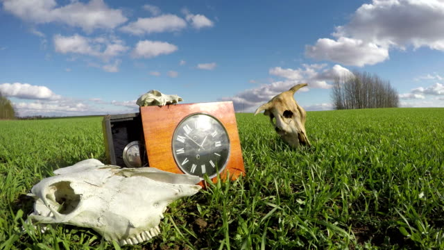 Cow and horse skulls on field and clock, time lapse 4K video