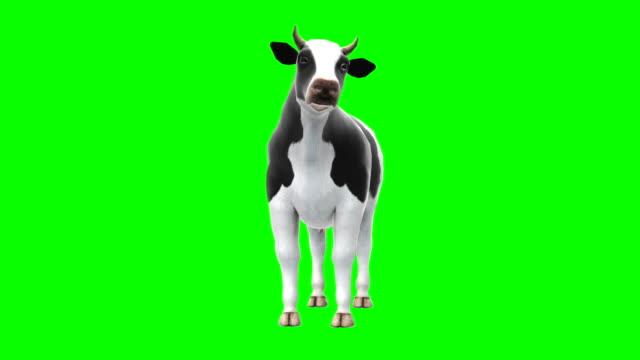 암소 를 먹어 녹색 화면 (루프 가능) - 암소 스톡 비디오 및 b-롤 화면