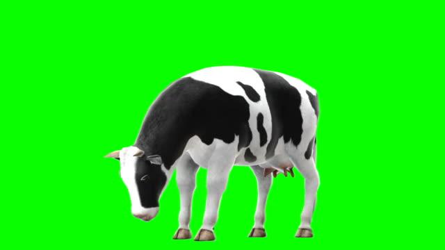 녹색 화면 (loopable)를 먹는 암소 - 암소 스톡 비디오 및 b-롤 화면