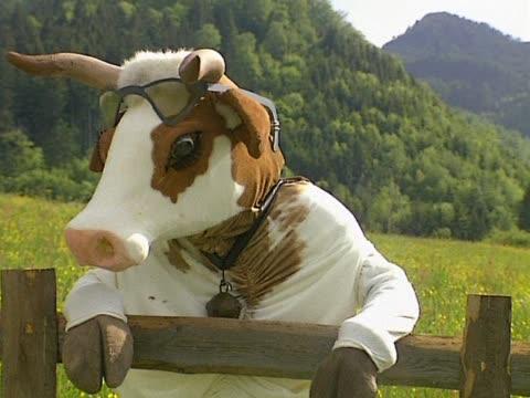 cow leaned on fence - eksantrik stok videoları ve detay görüntü çekimi