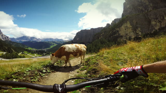 Cow on my way! video