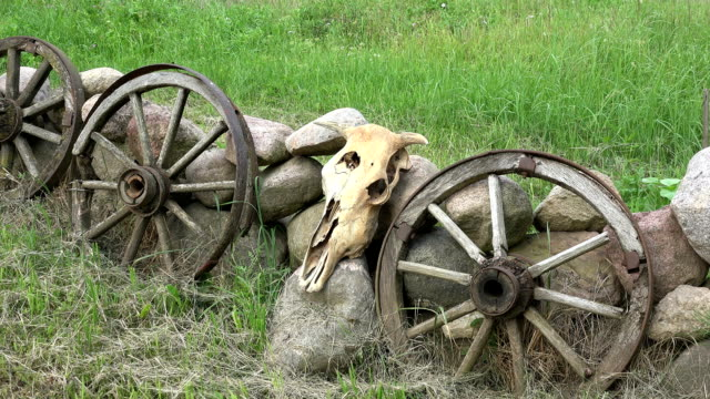 Cow skull, horse carriage wheels and stones in farm video
