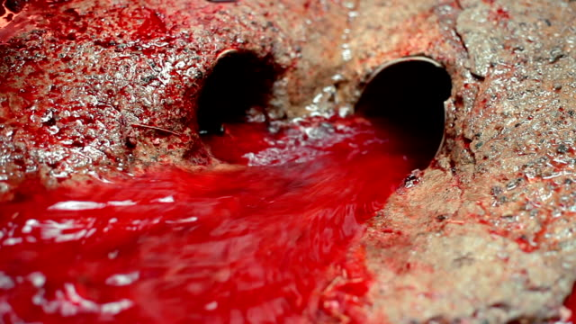 Cow Slaughterhouse (Abattoir)  - River of Blood