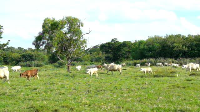 牝牛 - 動物の身体各部点の映像素材/bロール