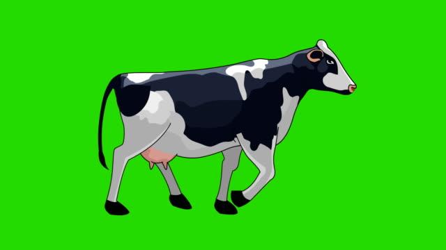 cow walk cycle animation - żywy inwentarz filmów i materiałów b-roll